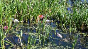 trash in the water is dangerous to wildlife